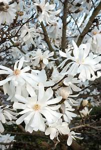 Check Out These Cool Characters  The Top Plants For Winter