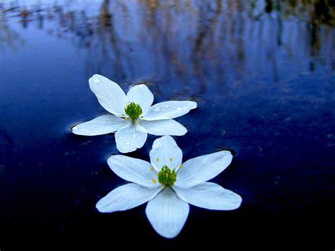 water flower water flower wallpaper 1600x1200 4961