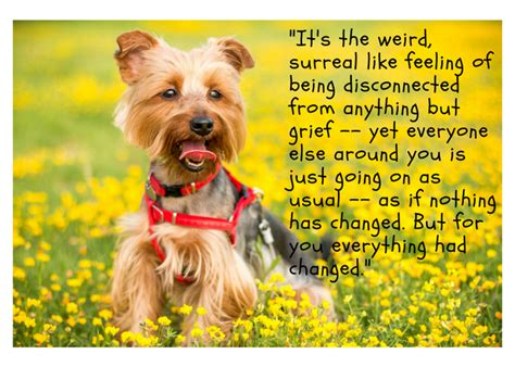 quotes    mourn  loss   dog