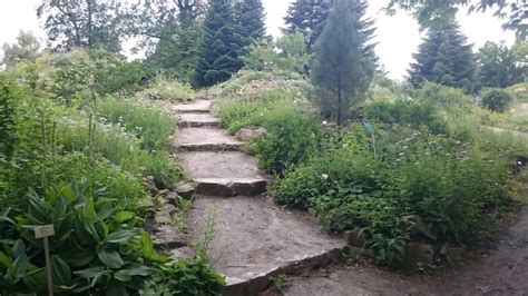 Botanischer Garten Berlin Musik by Botanischer Garten Berlin Juni 2016