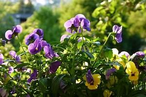 Blumen Im Frühling : der garten im fr hling blumen salat im hochbeet und im blumenkasten ~ Orissabook.com Haus und Dekorationen