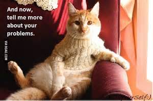 cat psychology related keywords cat psychology