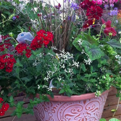 shade flowers for pots shade flower pot garden time pinterest
