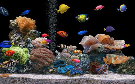 colorful aquarium fish tropical aquarium wallpaper amazing wallpapers