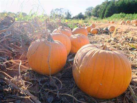Colorado Pumpkin Patches 2017 by 10 Pumpkin Patches To Visit In Georgia This Fall