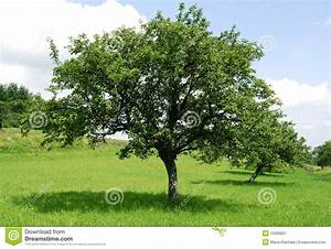 Green Apple Tree Clipart - Clipart Suggest