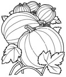 Pumpkin Patch Coloring Pictures by Pumpkin Patch Coloring Sheet Coloring Page Pinterest