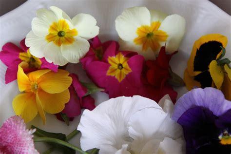 comment cuisiner des rognons de boeuf et si on mangeait des fleurs galerie photos d 39 article