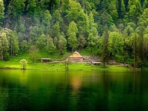 Green Lake Wooden House Pine Forest Meadow Hd Desktop ...