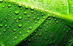 Green, Leaf, With, Water, Droplets, Hd, Wallpaper, Wallpapers13, Com