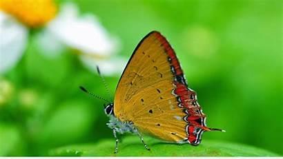 Butterfly Nature Macro 1080p Wallpapers Desktop Resolution