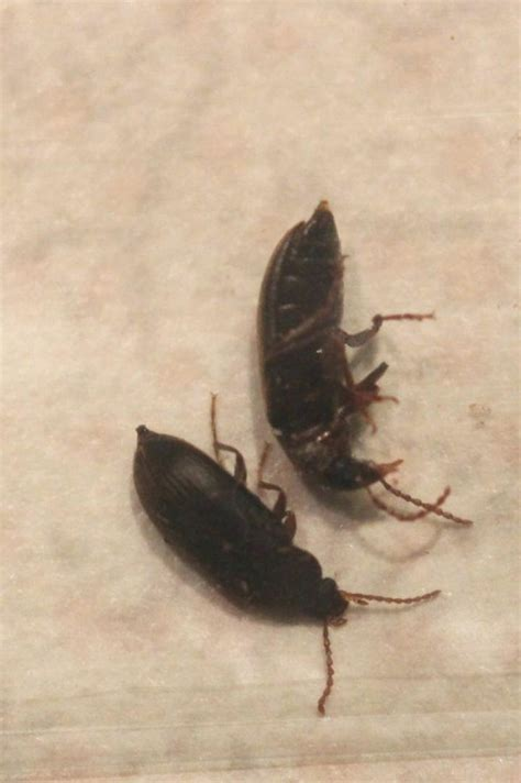 Best Little Black Bugs With Insect And Spider Ident #12515