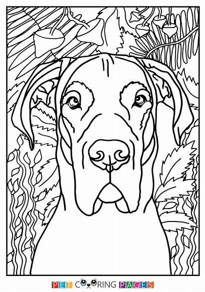 Dane Coloring Dog Lion Hunting Mountain Funny