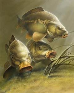 17 Best images about CARP on Pinterest | Carp fishing ...