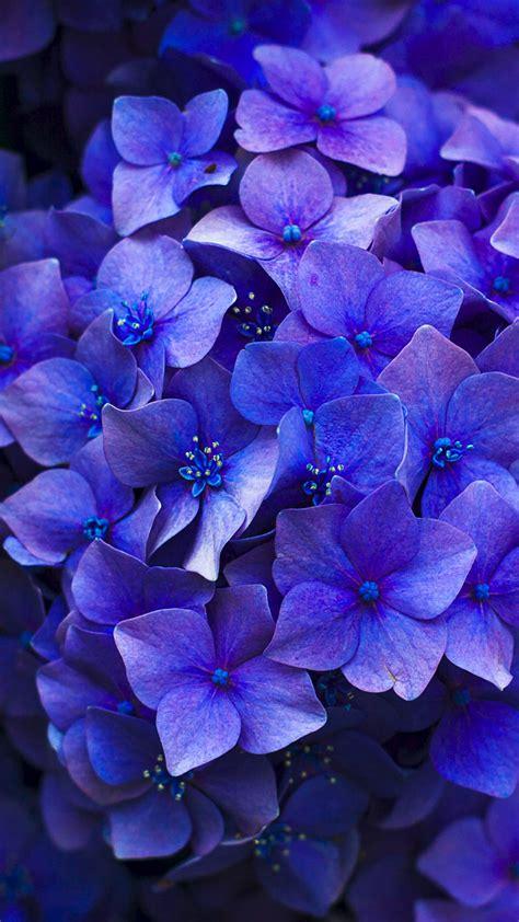 Elke dag worden duizenden nieuwe afbeeldingen van hoge kwaliteit toegevoegd. 27 Floral iPhone 7 Plus Wallpapers for a Sunny Spring ...