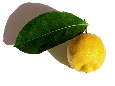 bergamote cuisine la cuisine du jardin bergamote bergamot bergamotto