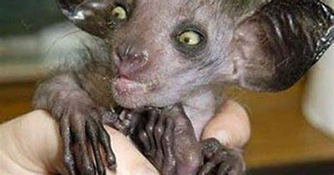 Creepy Weird Bad Ugly Animals The Earth Pics Images