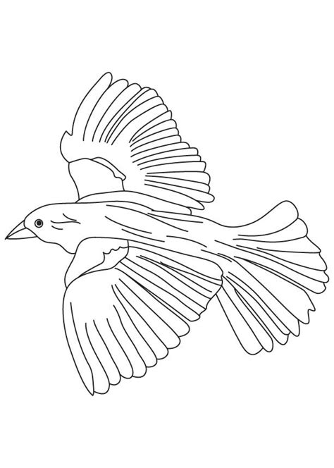 flying bird coloring pages coloring home