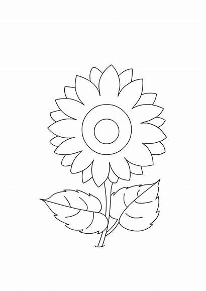 Coloring Flowers Sunflower Craft Flower Different Activities