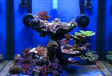 saltwater aquascaping ideas top reef tank aquascapes my 2m reef aquarium ideas