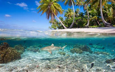 download wallpapers underwater world of tropical islands shark palm trees summer tropical