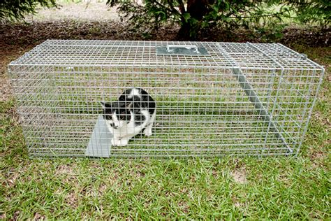 Why Getting Involved In Tnr Is Easier Than You Think