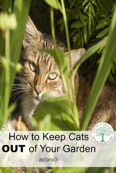 how to keep cats out of your yard how to keep stray cats out of your yard garden ideas gardening and outdoor cats