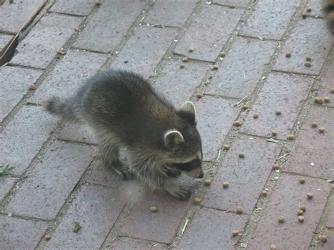 baby he coons kept falling sitting standing butt hard had long july