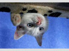 Katzen – Die Welt unserer Hauskatzen