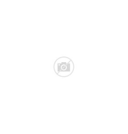 Vanilla Bean Transparent Clipart Beans Flower Orchid