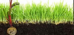 Wann Wächst Rasen : hier w chst kein gras mehr das gartenmagazin ~ Markanthonyermac.com Haus und Dekorationen