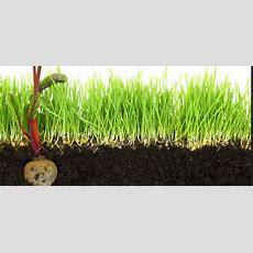 Hier Wächst Kein Gras Mehr › Das Gartenmagazin