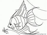 Fish Coloring Tropical Pages Realistic Angel Drawing Luau Colouring Printable Line Hawaiian Angelfish Drawings Aquarium Printables Outline Sheets Goldfish Draw sketch template