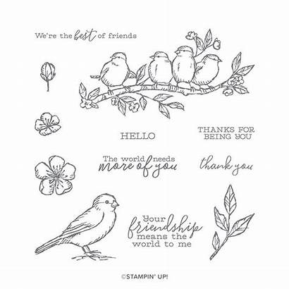 Stampin Bird Stamp Stamps Cling Hop Card