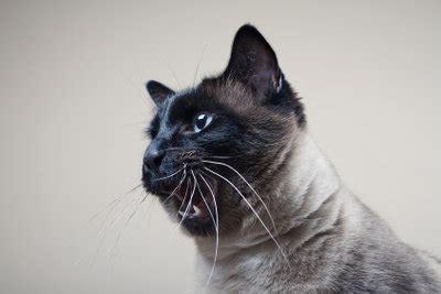 hilft gegen haarausfall bei katzen