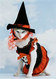 cats in costumes n tiny