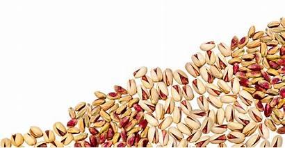 Dry Pistachio Fruit Clipart Fruits Grains Transparent
