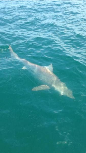 Fishing Boat Charters Sarasota Fl by It S All Good Family Charters In Sarasota Florida Us
