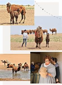 Kaschmir Wolle Tier : kaschmir wolle was damit geschieht und wie sie zu ~ A.2002-acura-tl-radio.info Haus und Dekorationen