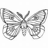 Moth Coloring Butterfly Insects Cocoon Silk Drawing Pages Moths Colouring Luna Printable Drawings Designlooter Print Geographic National 300px 92kb Getdrawings sketch template