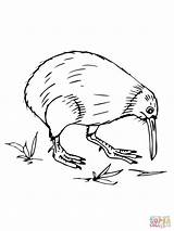 Coloring Pages Kiwi Australian Bird Printable Zealand Birds Drawing Animal Sketch Template Designlooter Draw Getdrawings 1600px 37kb 1200 Supercoloring Categories sketch template