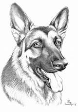 German Shepherd Coloring Shepherds Drawing Dog Puppy Puppies Template Face 1094 1572 Drawings King Moon Findpik Amp Sketch Templates Rottweiler sketch template