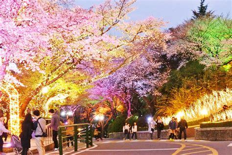 destinasi wisata gratis  korea selatan  perlu