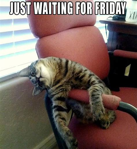 Friday Cat Meme - funny friday pictures