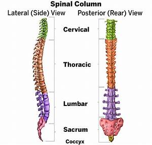 Scoliosis In Adults  What To Know About Symptoms  U0026 Treatment