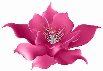 Transparent Flower Pink Clip Clipart Flowers Magnolia