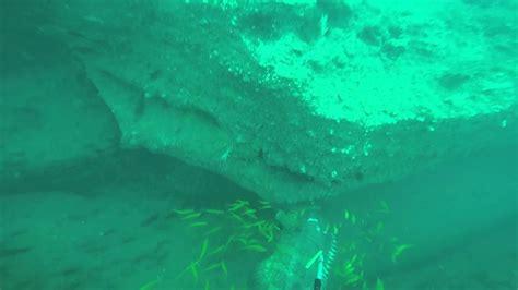 grouper spearfishing goliath