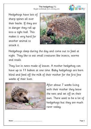 hedgehogs   animal kingdom  urbrainycom
