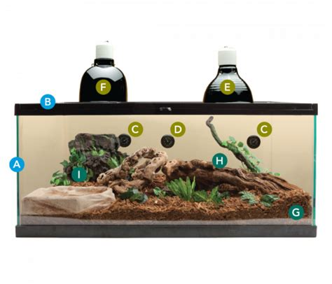 Ball Python Bedding by Curly Tailed Lizards