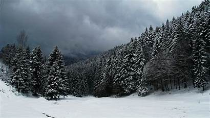 Forest Snowy Snow Winter Wallpapers Background Clouds